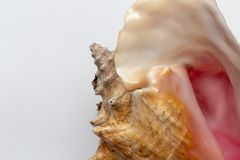 Dry gigantic sea shell. Soft surface inside, rough and textured Royalty Free Stock Photos