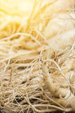 Dry Ginseng Roots with warm light effect. stock photo