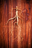Dry ginseng on wood background Royalty Free Stock Images