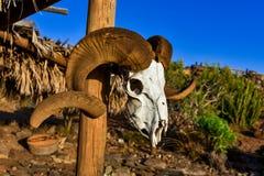 Dry Goat Skull stock photos