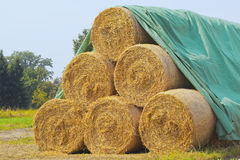 Dry golden Hay bales Royalty Free Stock Images