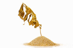 Dry golden plant Stock Image
