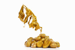 Dry golden plant on gold rock Royalty Free Stock Images