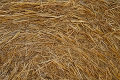 Dry golden straw bale texture or background. Dry golden straw bale texture background stock images
