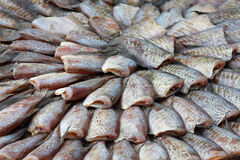 Dry gourami fish Stock Images