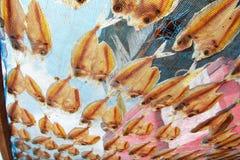 Dry gourami fish Stock Photography