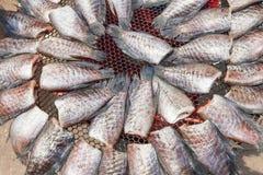 Dry Gourami fish Stock Photo