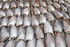 Dry Gourami fish Royalty Free Stock Image