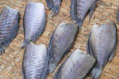 Dry gourami fish Royalty Free Stock Photography