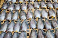 Dry Gourami fish, preservation. Royalty Free Stock Image