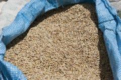 Dry Grain Royalty Free Stock Photo