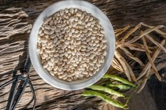 Dry grains of white beans lie on a wooden table in a white plate. Vegan food, animal protein substitute stock images