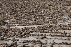 Dry grange in the season of drought Stock Photo