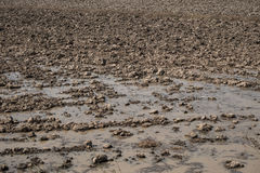 Dry grange in the season of drought Royalty Free Stock Image