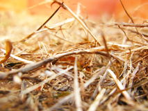 Dry grass. On the ground, closeup Stock Photo