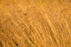 Dry grass Stock Photo