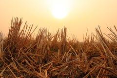 Dry grass Stock Photos