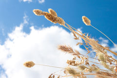 The dry grass Stock Image
