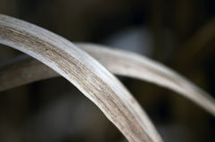 Dry grass. Detail of a dry grass royalty free stock photos