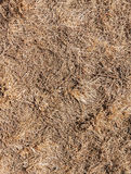 Dry grass. Royalty Free Stock Photography