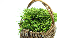 Dry grass. Stock Image