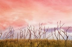 Dry grass. And branches at sunset Stock Photography