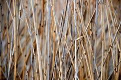 Dry grass stock photo