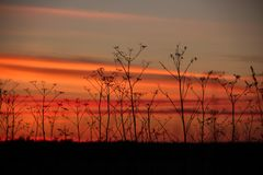 Dry grass against the sunset. Beautiful sunset of the October Sun. Very romantic sight stock image