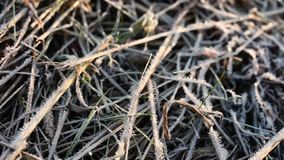 Dry grass all in frost, morning frosts autumn stock footage