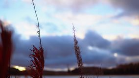 Dry grass amid the clouds at sunset stock footage