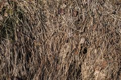 Dry grass as background royalty free stock photography