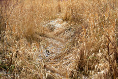 Dry grass as a natural background Stock Photos