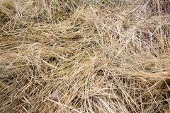 Dry grass Royalty Free Stock Photos