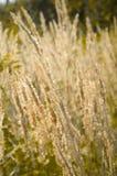 Dry grass, autumn Royalty Free Stock Photos