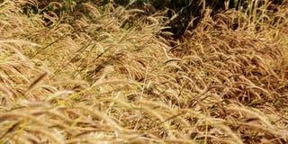 dry grass in autumn season Stock Photo