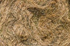 Dry grass backgound. Dry grass in haystack background Stock Photos