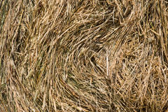 Dry grass backgound Stock Image