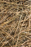 Dry grass backgound Royalty Free Stock Photos