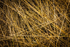 Dry grass background Royalty Free Stock Image