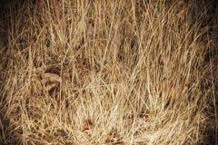 Dry grass background Royalty Free Stock Photos