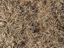 Dry grass background. Spring drought climate sunny weather wallpaper backdrop earth soil nature brown fire environmental organic plant texture surface stock photos