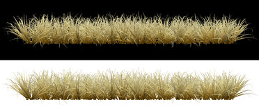 Dry grass on an  background Royalty Free Stock Images
