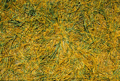 Dry grass for background Stock Images