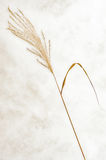 Dry grass with background. View of one dry grass with background Royalty Free Stock Photo