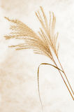 Dry grass with background. View of two dry grass with background Stock Image
