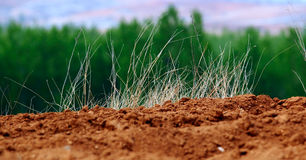 Dry grass  in backlit Stock Image