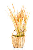 Dry grass in basket Royalty Free Stock Images