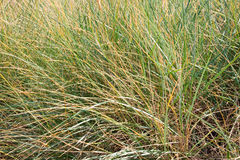 Dry grass on a beach Royalty Free Stock Photo