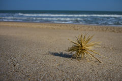 Dry grass on the beach Royalty Free Stock Photography