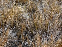 Dry grass. Beige, brown, khaki for a wallpaper Royalty Free Stock Image